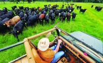 Nông trại sinh thái lớn nhất nước Mỹ
