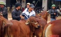 Nghệ An: Chợ trâu, bò xuyên quốc gia ở Đô Lương