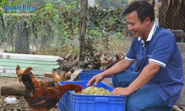 Nuôi gà Lạc Thủy bằng giá đỗ, lúa mầm