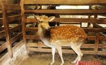 Quỳnh Lưu (Nghệ An): Thành tỷ phú nhờ nuôi hươu, nai