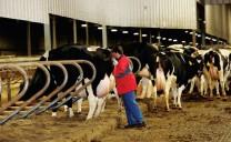 """Larson Acres - Trại bò """"hạnh phúc"""""""