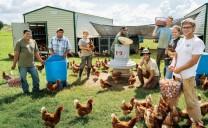 Trại gà hữu cơ White Oak Farm