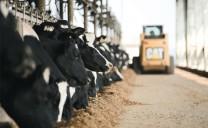 """3 """"trụ cột"""" ngành chăn nuôi"""