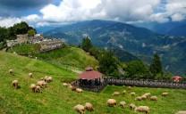 Cingjing Farm - Thụy Sỹ thu nhỏ tại Đài Loan