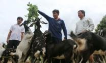 Ấp Rạch thọ, xã Đất Mũi: Hướng đến xây dựng tổ hợp tác nuôi dê