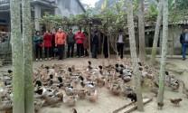 Định Hóa (Thái Nguyên): Đánh giá hiệu quả mô hình nuôi vịt bầu sinh sản