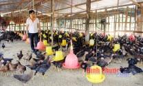 Bình Phước: Chăn nuôi theo chuỗi giá trị - Hướng đi bền vững cho nông dân
