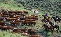 Argentina: Sẽ mở rộng thị trường tiêu thụ nông sản tại Trung Quốc