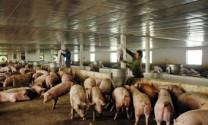 Tín dụng cho vay chăn nuôi, thủy sản tăng 5,8%