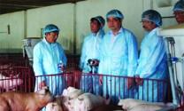 HTX Chăn nuôi heo an toàn tiên phong: Mở hướng nuôi heo VietGAP