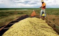 Brazil: Sản lượng đậu tương niên vụ 2015 - 2016 ước đạt 97 triệu tấn