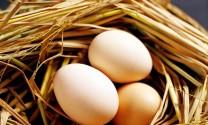Trứng gà Đồng Nai được thị trường ưa chuộng