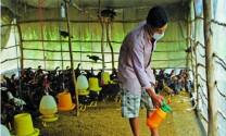 Tiêu độc, khử trùng trong chăn nuôi
