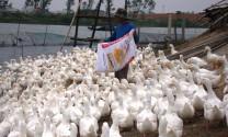 Quảng Bình: Sản lượng thịt hơi xuất chuồng trên 30 nghìn tấn