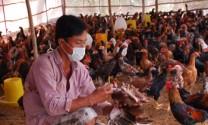 Yên Bái: Chăn nuôi nhiều tiến triển tốt