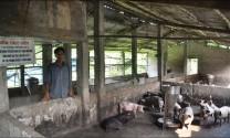Bình Dương: Xử phạt 2 cơ sở sử dụng chất cấm trong chăn nuôi