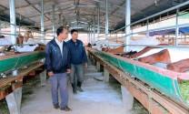 Lâm Đồng: Triển vọng trang trại nuôi dê Thái ở Di Linh