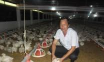 Làm giàu từ nghề nuôi gà và nuôi heo gia công