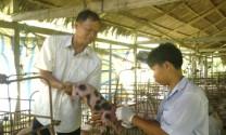 Cà Mau: Huyện Thới Bình ra quân phòng chống dịch bệnh trên gia súc, gia cầm