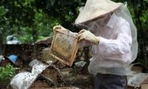 Tháo gỡ khó khăn cho ngành ong