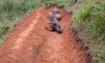 19 con trâu chết hàng loạt tại thôn Khuổi Dò, Bạch Ngọc là do sét đánh