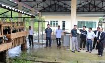 Hà Giang: Đồng Văn cải tạo tầm vóc đàn dê