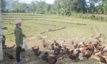 Hòa Bình: Toàn tỉnh có 85 cơ sở chăn nuôi quy mô lớn
