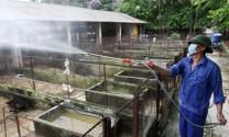Hỗ trợ hóa chất và vaccine cho các địa phương