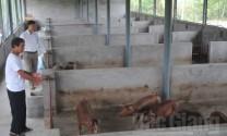 Chủ trang trại chăn nuôi Lương Văn Tuấn: Đi lên từ gian khó