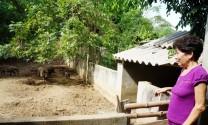Mô hình nuôi đà điểu hộ gia đình: Bỏ hoang chuồng trại
