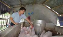 Quảng Nam: HTX Nông nghiệp Duy Đại Sơn hoạt động hiệu quả