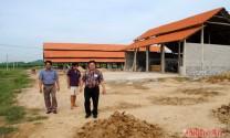 Tân Kỳ (Nghệ An): Nông dân đầu tư nuôi bò sữa
