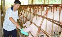 Anh Nguyễn Nghĩa Dũng: Vươn lên từ nghề chăn nuôi heo