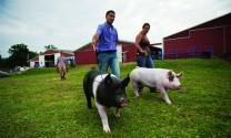 Butler Farms - Công nghệ nuôi heo bảo vệ môi trường