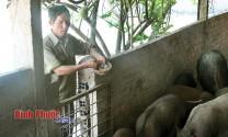 Thu hơn 100 triệu đồng/năm từ chăn nuôi hỗn hợp
