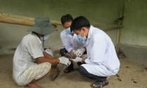 Thử nghiệm thành công vắc-xin cúm trên chim trĩ