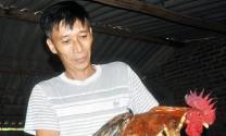 Hiệu quả mô hình nuôi gà 6 cựa ở Quảng La