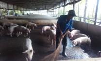 Đồng Nai: Phát hiện thêm 1 hộ chăn nuôi heo sử dụng chất cấm