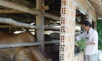 Bình Định: Vân Canh tổ chức Hội nghị tổng kết mô hình vỗ béo bò