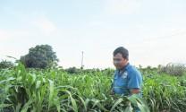 Quy hoạch vùng trồng cỏ đảm bảo chăn nuôi phát triển bền vững