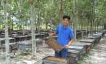 Vất vả nghề nuôi ong lấy mật