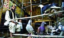 Thăm khu chợ chim Ka Farushi, Afghanistan