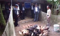 Hà Nam: Phát triển kinh tế từ nuôi gà Móng Tiên Phong