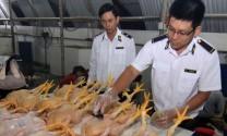 Cảnh báo về nguyên liệu tạo màu vàng trong thịt gà có thể gây ung thư