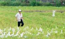 Tiền Giang: Người nuôi vịt điêu đứng vì giá giảm sâu