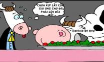 Chuyện của bò