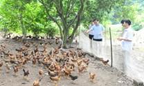 Tuyên Quang: Những chủ trang trại lớn ở Sơn Nam