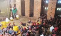 Xã Vạn Thắng (Khánh Hòa): Hiệu quả từ liên kết nuôi gà thả vườn