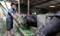 Hà Giang: Người đi đầu trong phát triển sản xuất và thoát nghèo ở Thèn Phàng