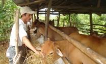 Phú Yên: Tăng cường công tác phòng, chống dịch bệnh gia súc, gia cầm